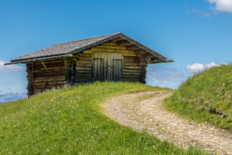 Alpe de Siusi flower meadows, Dolomites