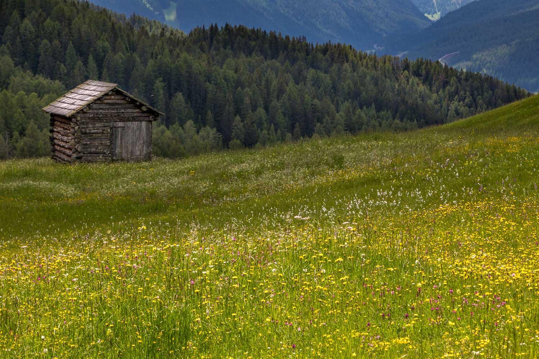 Armentara meadows, Dolomites