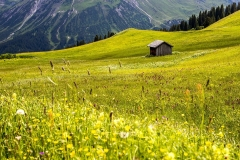 Austrian Alps meadows