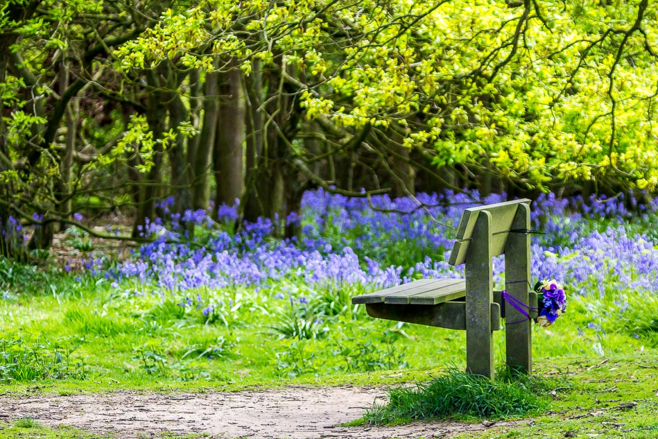 Bench on Beverley Westwood