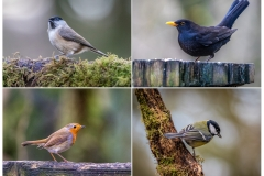 Birdwatcher's car park, Forge Valley