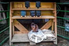 The farm cat, Wilkinsyke, Buttermere