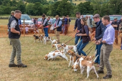 Judging the beagles at the Lorton Show