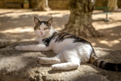 The village cat, Vers Pont du Gard, France