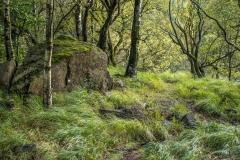 Thirlmere woodland