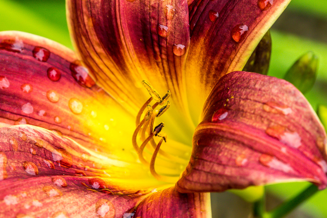Lily at Newby Hall