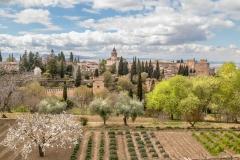 Alhambra-106