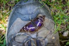Butterfly on walking boot