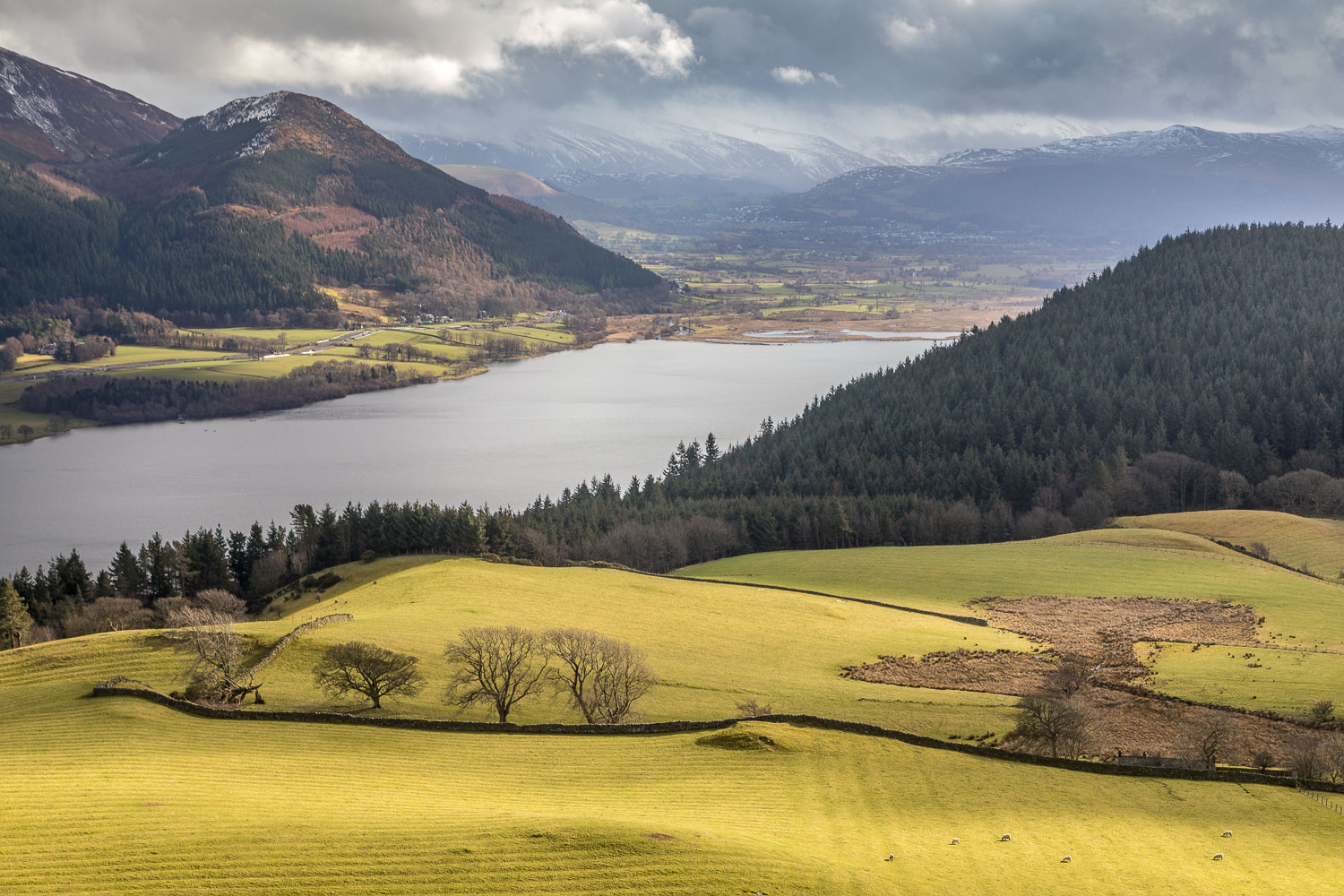 Bassenthwaite Lake from Lothwaite
