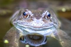 frog-2