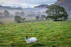 mist, Lorton Vale