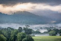 mist, Lanthwaite Wood