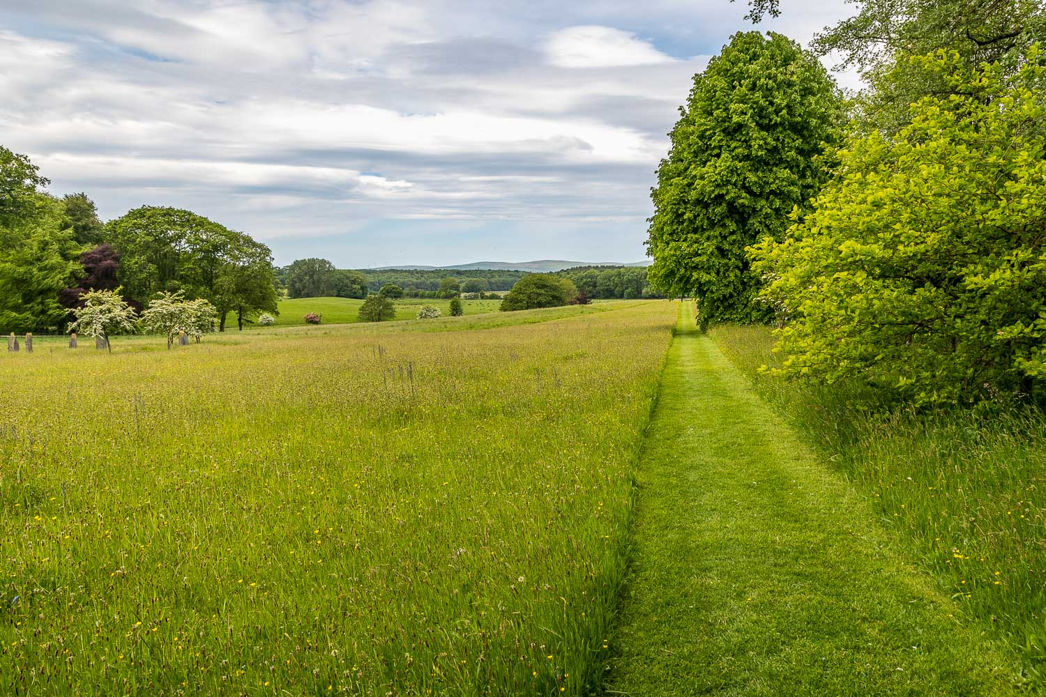 Wild meadow, Holker Hall