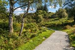 Path around Tarn Hows