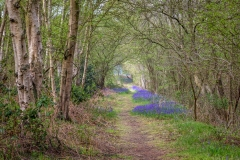 North Cliffe Wood, East Yorkshire
