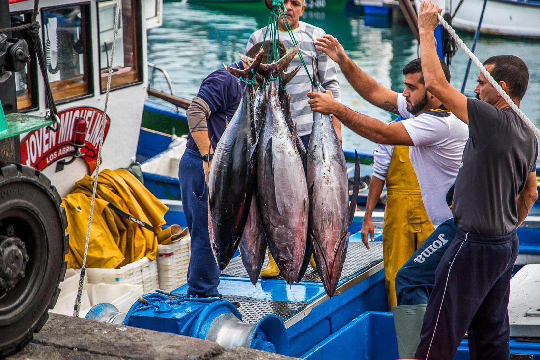 Tuna catch in Tenerife