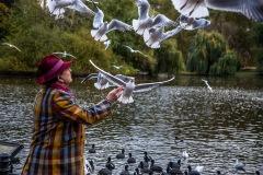 Feeding the birds St James's Park Lake