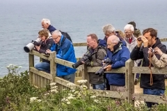 Photographers on Bempton Cliffs