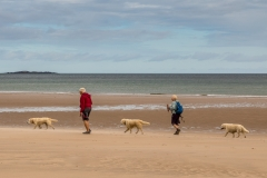 Walking the dogs, Northumberland