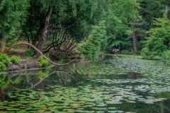 Japanese Garden, Tatton Park