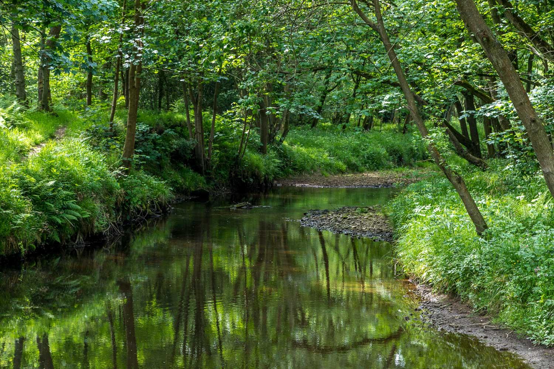 River Derwent near Hackness