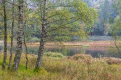 River Rothay near Rydal