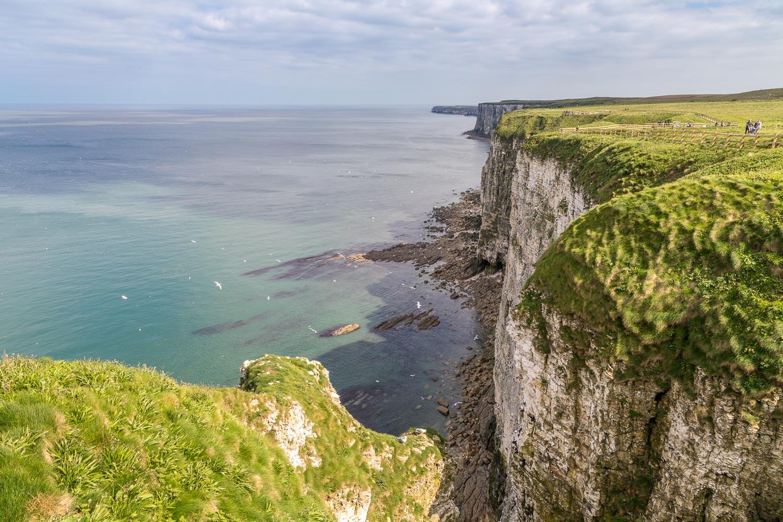 Bempton Cliffs