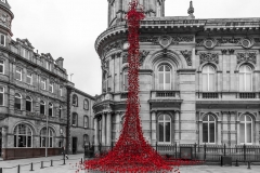 Weeping Poppies, Hull