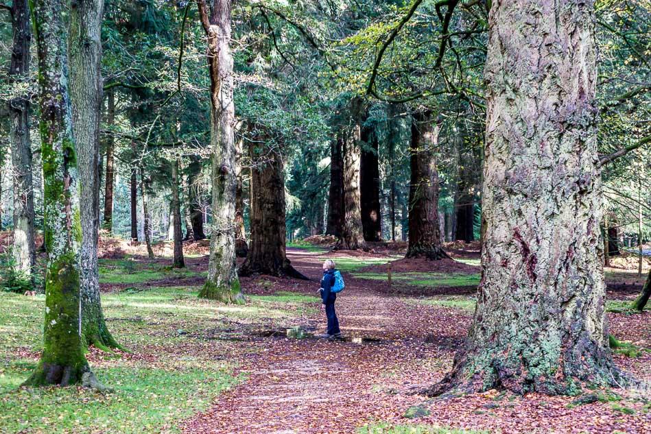 Rhinefield Tall Trees Trail