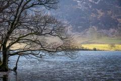 Crummock Water tree