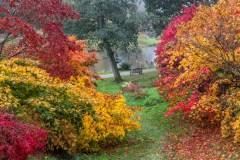 Yorkshire Arboretum, acer