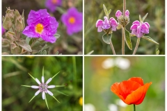 Wildflowers of Andalucia