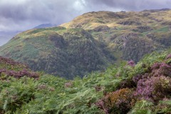 Heather, Great Crag, Borrowdale