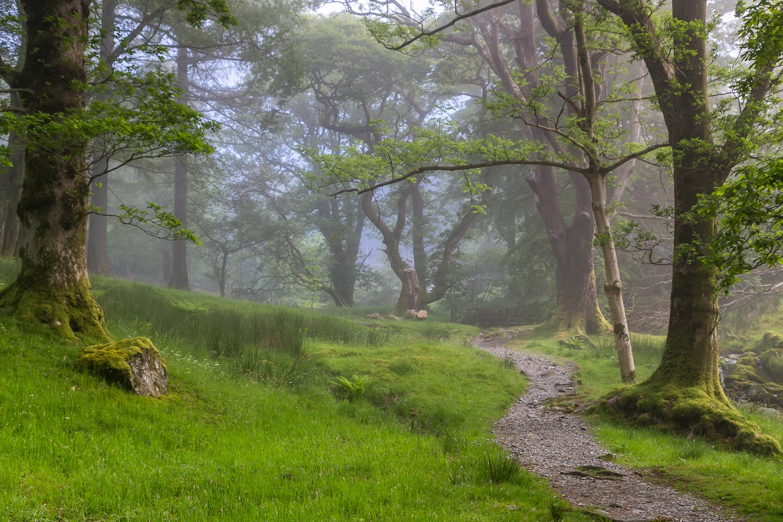 Crag Wood, Buttermere