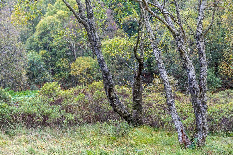 Derwent Water woodland