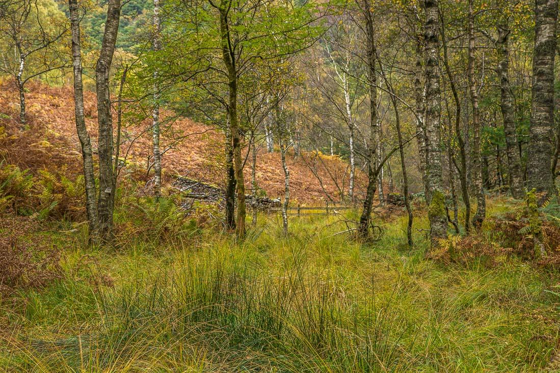 Cummacatta Wood, Grange