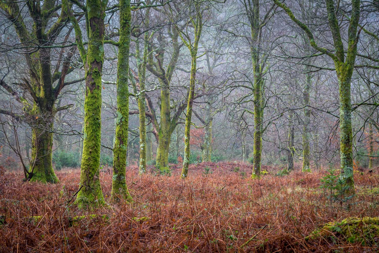 Holme Wood, Loweswater