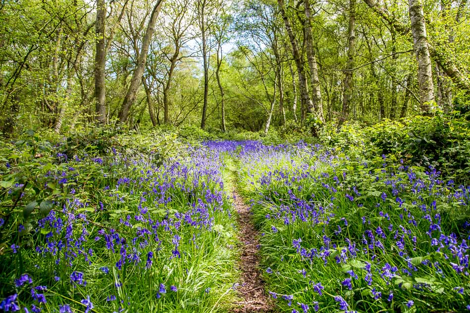 North Cliffe Woods, East Yorkshire