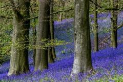 Flakebridge Wood, Eden Valley