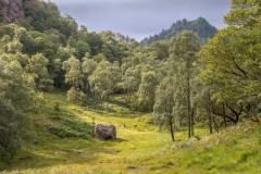 Cummacatta Wood, Borrowdale