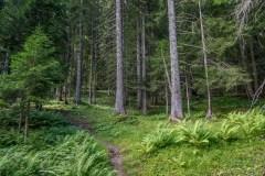 Mont de Grange nature reserve, Chablais Alps
