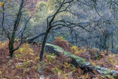 Borrowdale woodland