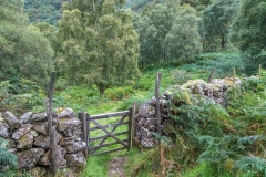 Cummacatta Wood, Borrowdale