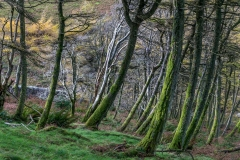 Holme Wood Loweswater