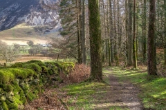 Lanthwaite Wood