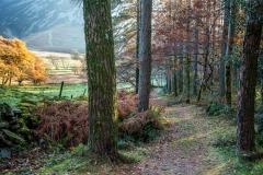 Lanthwaite Wood, Crummock Water