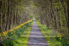 Melrose walk