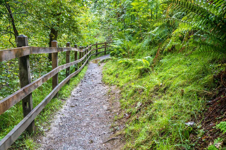 Coedydd Aber National Nature Reserve