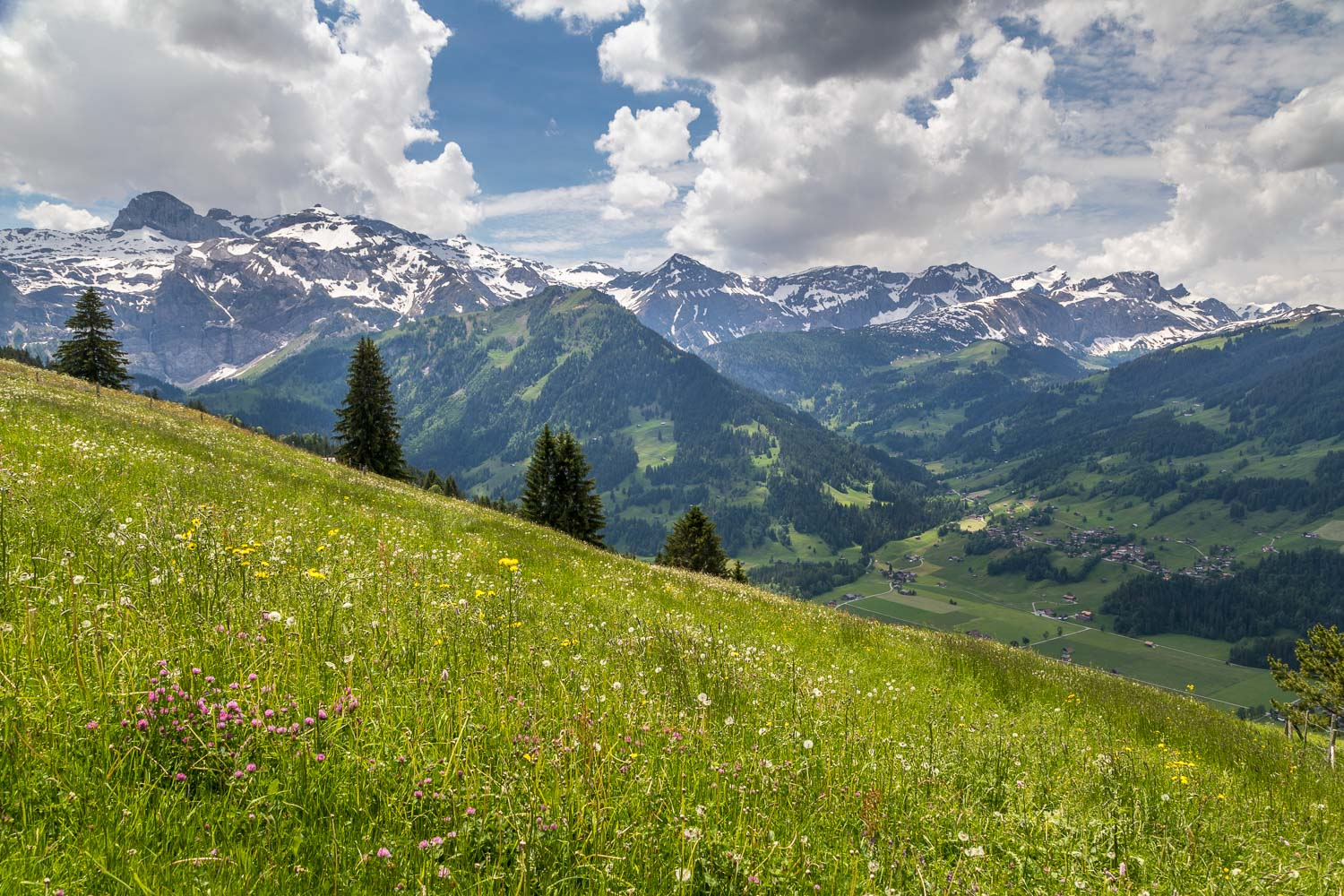 Simmental Valley