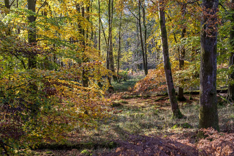 Ullswater walk, Dobbin Wood